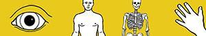 desenhos de Corpo humano para colorir